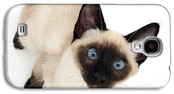 Studio Photography Galaxy S4 Cases - Siamese Kitten Galaxy S4 Case by Jane Burton