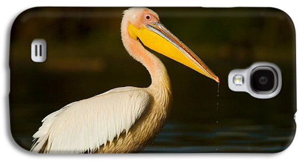 Side Profile Of A Great White Pelican Galaxy S4 Case by Panoramic Images