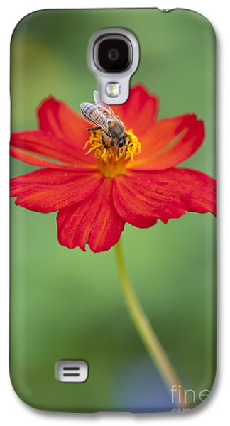 Light Galaxy S4 Cases - Simply Bee Galaxy S4 Case by Tim Gainey
