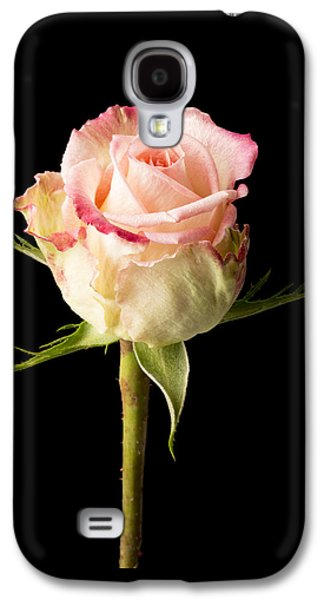Botanical Galaxy S4 Cases - Single pink rose isolated on a black background Galaxy S4 Case by Matthew Barnes