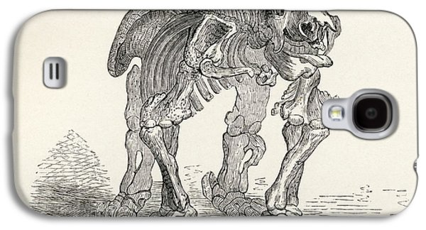 Sloth Drawings Galaxy S4 Cases - Skeleton Of The Megatherium From The Galaxy S4 Case by Ken Welsh
