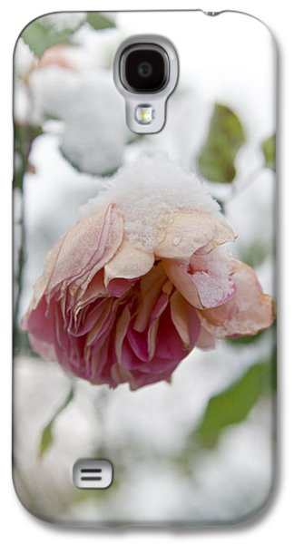 Concept Photographs Galaxy S4 Cases - Snow-covered rose flower Galaxy S4 Case by Frank Tschakert