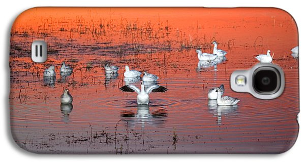Wildlife Refuge. Galaxy S4 Cases - Snow Geese On Water Galaxy S4 Case by Panoramic Images