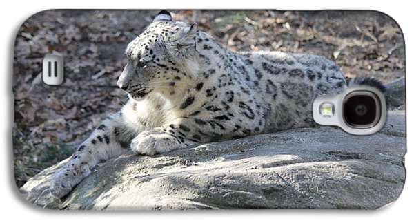 Leopard Pyrography Galaxy S4 Cases - Snow-Leopard Galaxy S4 Case by Cynthia Kirby