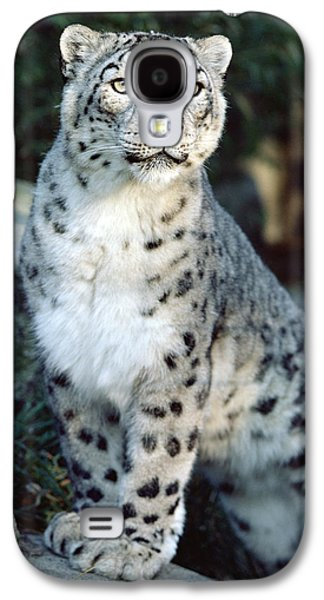 Animals and Earth - Galaxy S4 Cases - Snow Leopard Uncia Uncia Portrait Galaxy S4 Case by Gerry Ellis