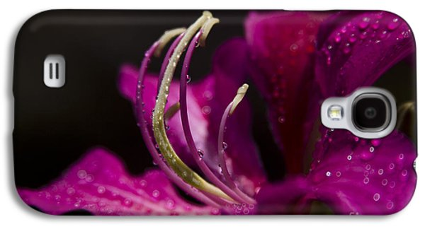 Something Wonderful Galaxy S4 Case by Sharon Mau