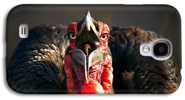 Southern Ground Hornbill Swallowing A Seed Galaxy S4 Case by Johan Swanepoel