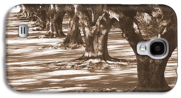 Tree Roots Galaxy S4 Cases - Southern Sunlight on Live Oaks Galaxy S4 Case by Carol Groenen