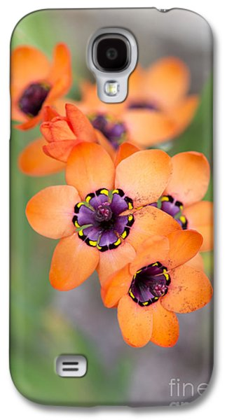 Filament Galaxy S4 Cases - Sparaxis Elegans Galaxy S4 Case by Tim Gainey