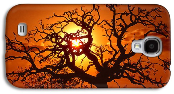 Spooky Galaxy S4 Cases - Spooky Tree Galaxy S4 Case by Stephen Anderson