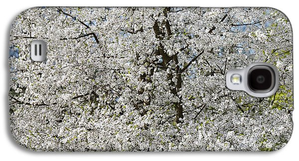 Rosaceae Galaxy S4 Cases - Spring Glory Galaxy S4 Case by Tim Gainey