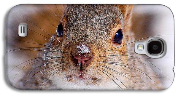 Squirrel Portrait Galaxy S4 Case by Mircea Costina Photography