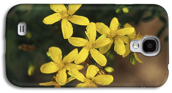 Antidepressant Galaxy S4 Cases - St. Johns Wort Plant Galaxy S4 Case by George Mattei