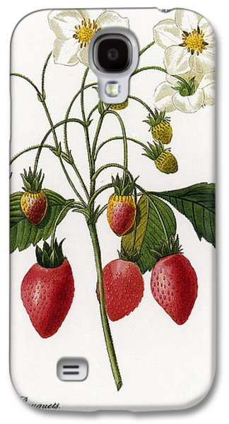 1833 Galaxy S4 Cases - Strawberry Galaxy S4 Case by Granger