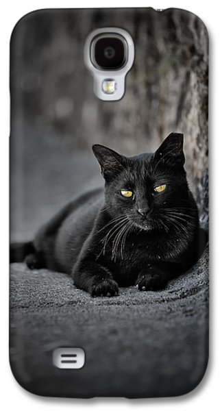 Photographs Galaxy S4 Cases - Stray Cat Galaxy S4 Case by Edgar Laureano