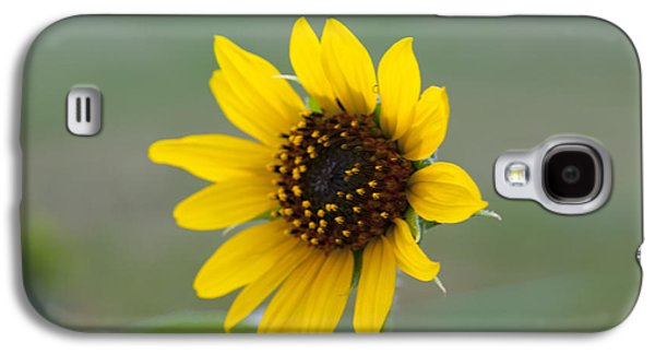 Sun Jewelry Galaxy S4 Cases - Sunflower Galaxy S4 Case by Sarah Pacheco