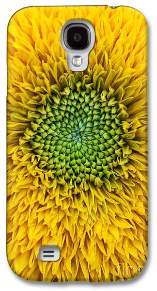 Botanical Galaxy S4 Cases - Sunflower Teddy Bear Galaxy S4 Case by Tim Gainey