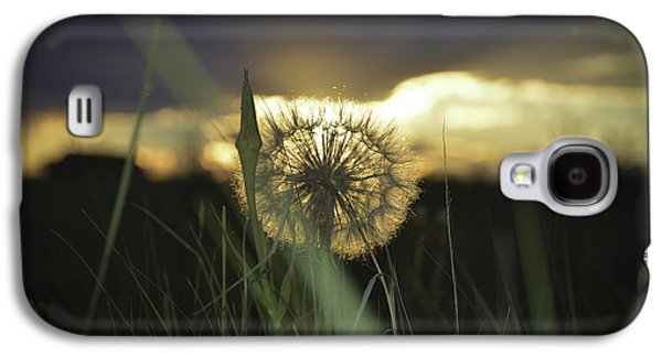 Fort Collins Galaxy S4 Cases - Sunset Dandie Galaxy S4 Case by Trish Kusal