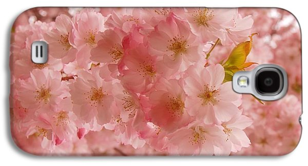 Cherry Blossoms Galaxy S4 Cases - Sweet Pink- Holmdel Park Galaxy S4 Case by Angie Tirado