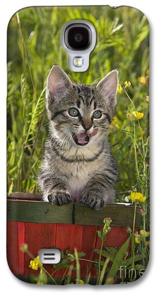 Gray Tabby Galaxy S4 Cases - Tabby Kitten Galaxy S4 Case by Jean-Louis Klein & Marie-Luce Hubert