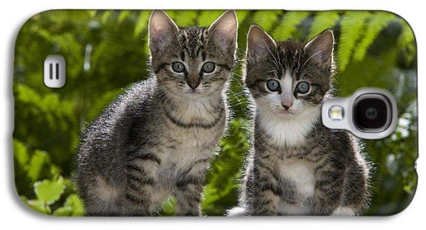 Gray Tabby Galaxy S4 Cases - Tabby Kittens Galaxy S4 Case by Jean-Louis Klein & Marie-Luce Hubert