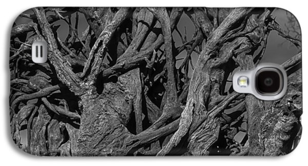 Tangled Tree Roots Galaxy S4 Case by Garry Gay