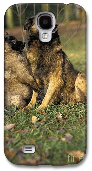 Tervuren Or Belgian Shepherd Dog Galaxy S4 Case by Gerard Lacz
