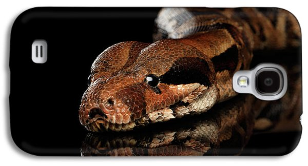 The Boa Constrictors, Isolated On Black Background Galaxy S4 Case by Sergey Taran