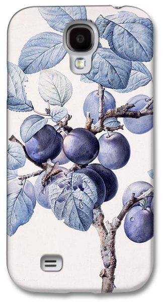 Plum Drawings Galaxy S4 Cases - The Branch of a Plum Tree Galaxy S4 Case by Pierre Joseph Redoute