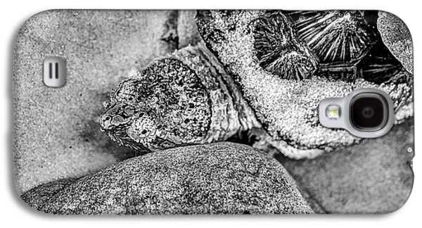 The Florida Snapping Turtle Galaxy S4 Case by JC Findley