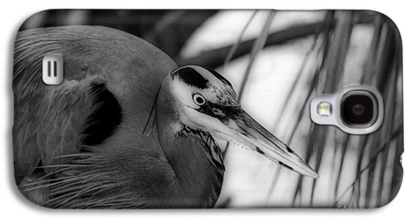 Photos Of Birds Galaxy S4 Cases - The Hunter Galaxy S4 Case by Skip Willits