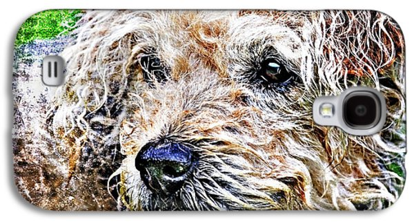 Mess Photographs Galaxy S4 Cases - The Scruffiest Dog In The World Galaxy S4 Case by Meirion Matthias