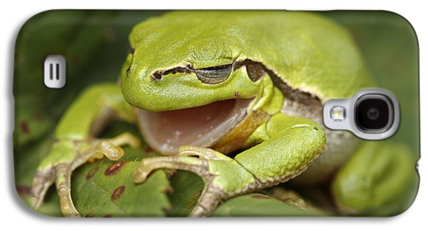 Shed Galaxy S4 Cases - The Yawning Tree Frog Galaxy S4 Case by Roeselien Raimond