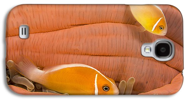 Undersea Photography Galaxy S4 Cases - This Common Anemonefish  Amphiprion Galaxy S4 Case by Dave Fleetham
