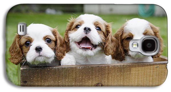 Three Cocker Spaniels Peeking Galaxy S4 Case by Gillham Studios