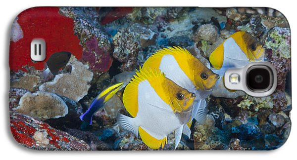 Undersea Photography Galaxy S4 Cases - Three Pyramid Butterflyfish Galaxy S4 Case by Dave Fleetham