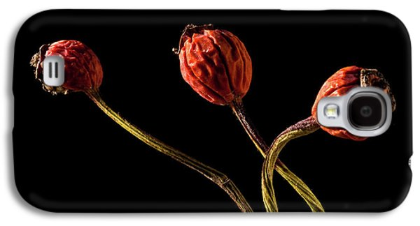 Tripple Galaxy S4 Cases - Three Rose Hips Galaxy S4 Case by  Onyonet  Photo Studios