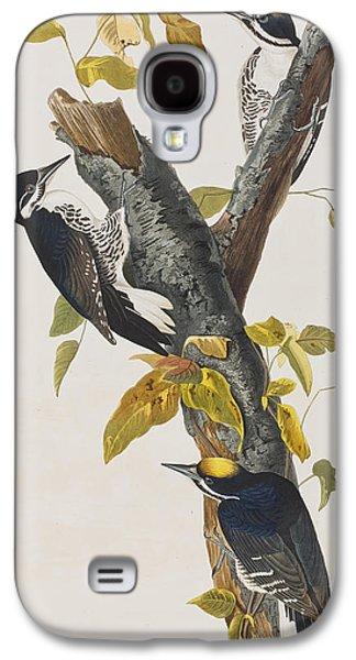 Three Toed Woodpecker Galaxy S4 Case by John James Audubon