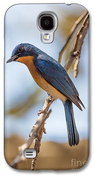 Tickells Blue Flycatcher, India Galaxy S4 Case by B. G. Thomson