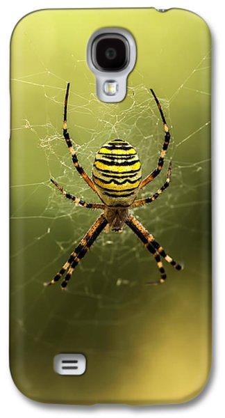 Creepy Galaxy S4 Cases - Tiger spider Galaxy S4 Case by Jaroslaw Blaminsky