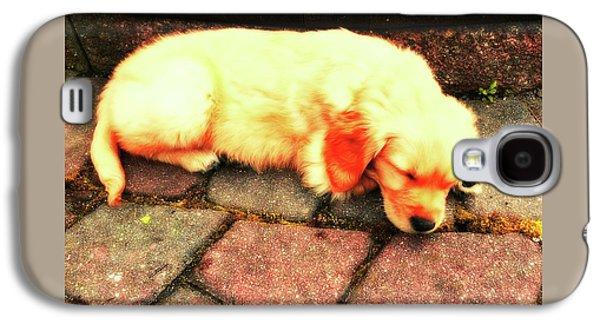 Puppy Digital Art Galaxy S4 Cases - Tilly Resting Galaxy S4 Case by John Feiser