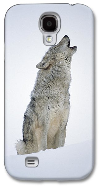 Animals and Earth - Galaxy S4 Cases - Timber Wolf Portrait Howling In Snow Galaxy S4 Case by Tim Fitzharris
