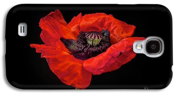 Graphic Photographs Galaxy S4 Cases - Tiny Dancer Poppy Galaxy S4 Case by Toni Chanelle Paisley