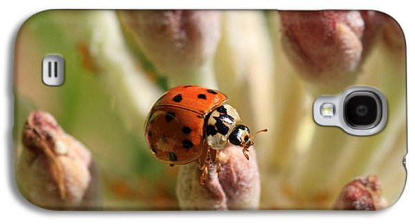 Ladybug Galaxy S4 Cases - Top of the Morning Galaxy S4 Case by Donna Kennedy