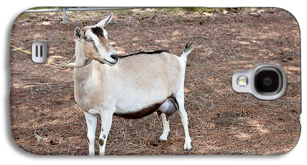 Uc Davis Galaxy S4 Cases - Transgenic Goat, Alpine Breed Galaxy S4 Case by Inga Spence