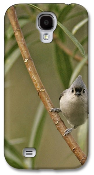 Tufted Titmouse Galaxy S4 Case by Phill Doherty