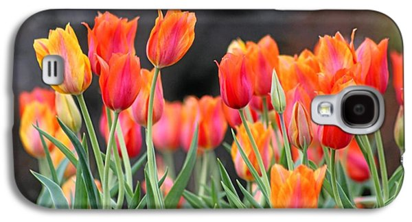 Cheekwood Galaxy S4 Cases - Tulips in the Breeze Galaxy S4 Case by Gayle Miller