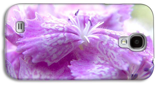 Biology Pyrography Galaxy S4 Cases - Turkish carnation Galaxy S4 Case by Vesna Cetojevic