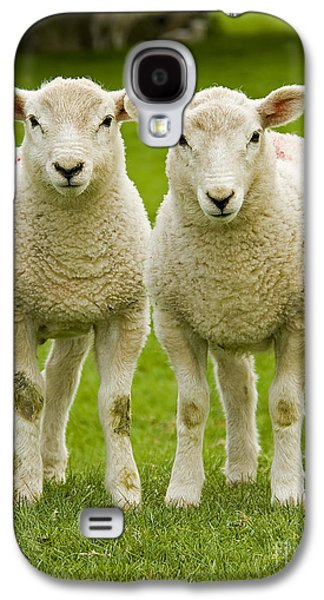 Nature Photographs Galaxy S4 Cases - Twin Lambs Galaxy S4 Case by Meirion Matthias