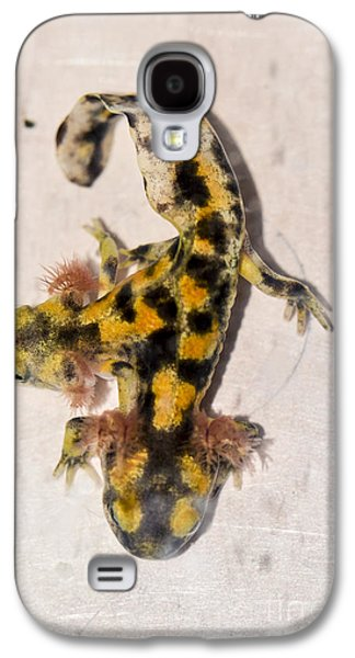 Two-headed Near Eastern Fire Salamande Galaxy S4 Case by Shay Levy